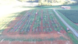drone view of pumpkin variety field plots