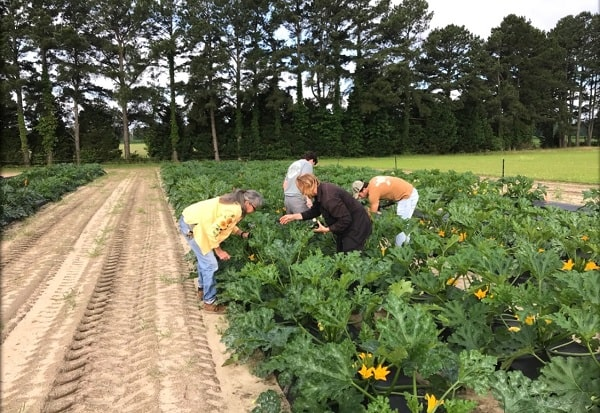 research associates in the squash field