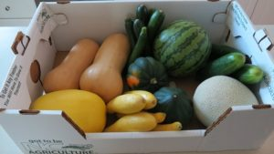 assortment of cucurbits in a box