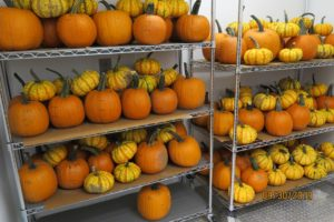 pumpkins in storage
