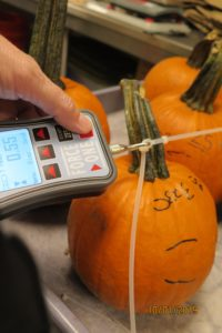 measuring pumpkins with a meter
